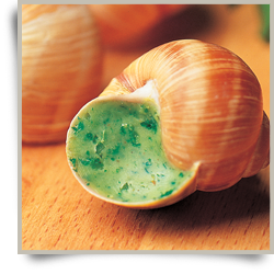 Wild Burgundy Snail, escargot